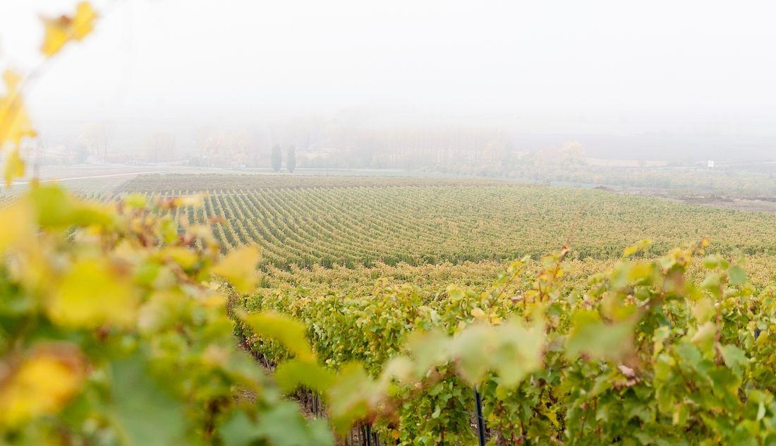Virgara Wines